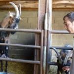 visite ferme Echerseau St Epain 055 [640x480]