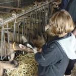 Visite à notre productrice/eur de fromages de chèvres