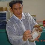 Bio Champi: pleurotes et shiitaké