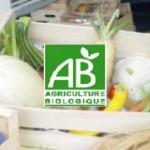 panier de légumes bio et local