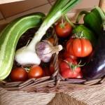 Courgettes, aubergines, poivrons, pastèques...ratatouille, cakes, confitures...