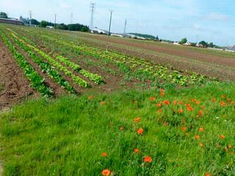 Les terres agricoles en péril