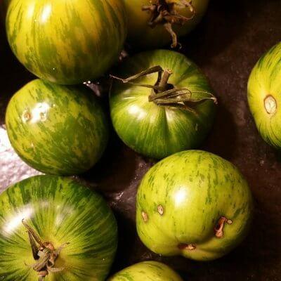 Tomates, des vertes et des pas mûres!